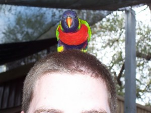 SAheadbird